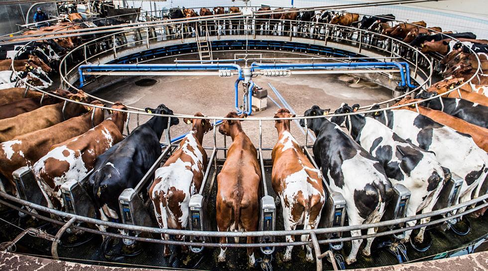 Kokarusell för köttillverkning